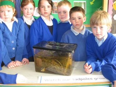 In First Class we collected tadpoles during the last week in Feb. We have been observing them closely in the classroom.