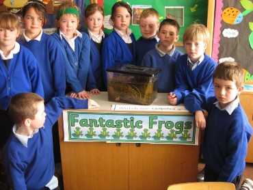 There was great excitement on Mon 11th Apr 2011 when we spotted our first baby frog!