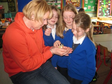 On 15th April Mattie brought a hen and some baby chicks into class.